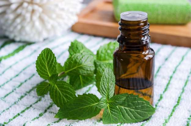 Peppermint Oil For Mice