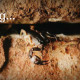 Scorpion in weep hole