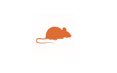 why-mice-use-weep-holes